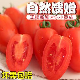 云南圣女果 小番茄 自然成熟脆嫩酸甜 原汁原味吃一口停不下来 5斤装包邮