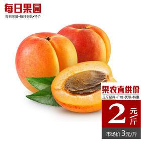 礼泉御杏 精选2斤装 新鲜水果陕西甜杏 曹杏红梅杏孕妇水果-864841