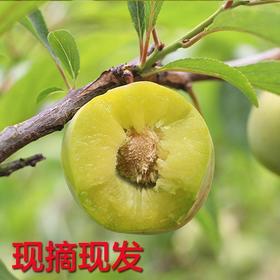 四川青李脱骨李子现摘青脆李孕妇水果5斤
