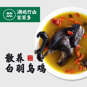 【生鲜预售】竹山白羽乌鸡丨净重约900g