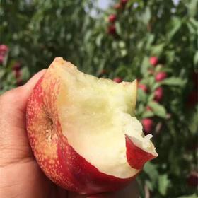 新疆冰糖油蟠桃   新鲜脆甜孕妇水果4斤装 现摘顺丰包邮
