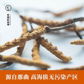 宜样新滋补 冬虫夏草C款 正品西藏那曲野生虫草药材一克4根 共20根