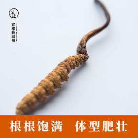 宜样新滋补 冬虫夏草B款 正品西藏那曲野生虫草药材一克3根 共15根
