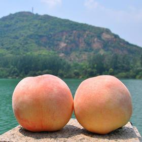 无锡阳山水蜜桃   个大饱满、香甜多汁,火山灰土壤孕育的江南美味