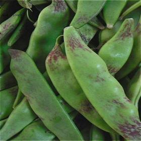 【四丰乡】顺山堡村纯绿色油豆角每斤12元