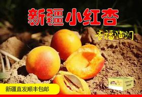 新疆阿克苏四团独有的高品质小红杏  3.5斤 /箱  顺丰包邮