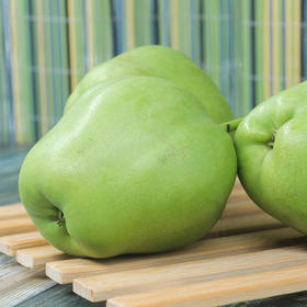 【清脆早酥梨   买5斤送3斤】| 产地新鲜采摘,酸甜多汁,果肉细腻