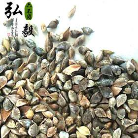 【弘毅六不用生态农场】荞麦籽粒,老品种 山东包邮 一斤/份