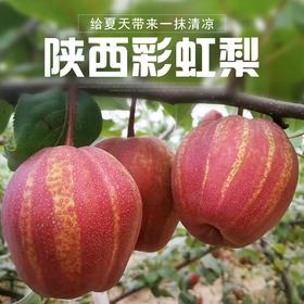 陕西彩虹梨酥红梨新鲜水果现摘脆甜多汁5斤装包邮