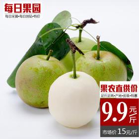 千脆蜜梨 精选1.6斤装 青梨皇冠梨子翠冠梨子新鲜水果-864844