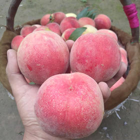 山西沙红水蜜桃软硬两吃5斤/8斤