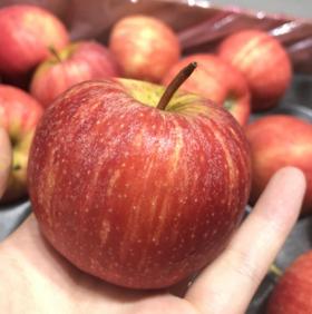 【南非MINI小苹果】单果约110g10颗/份约3斤  口感脆甜