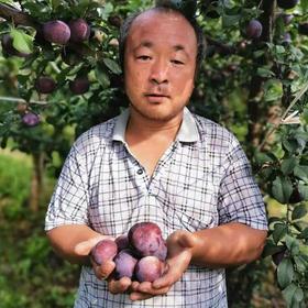 【公益助农】陕西黑布林大李子5斤装/9斤装