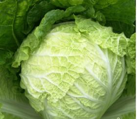 扶贫产品纯绿色秋白菜整棵7斤左右同城送货到家