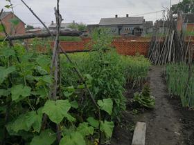 【敖其镇】扶贫产品纯绿色蔬菜、茄子、油豆角、姜豆角、黄金沟、大辣椒