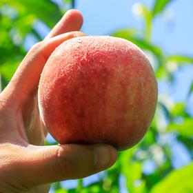 【苹果桃】建始特色农产品 苹果桃5斤装  七月底发货 预售中
