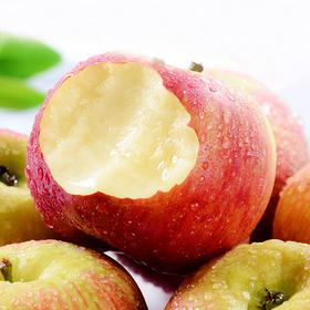 【甜】山西嘎啦苹果 肉质细腻 色泽诱人 果纹深红 现摘现发