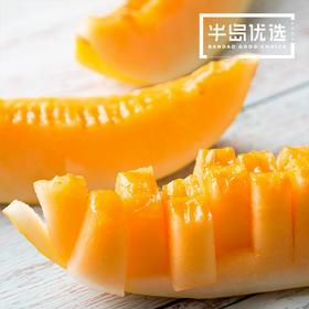 源自沙漠的味道 | 民勤金红宝蜜瓜 2-3个装  香甜可口 水润多汁 源自沙漠的味道 7.8-8.2斤