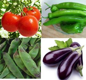 【扶贫助农】平安乡兴安村,蔬菜组合【茄子、豆角、辣椒、土豆、西红柿、粘玉米】