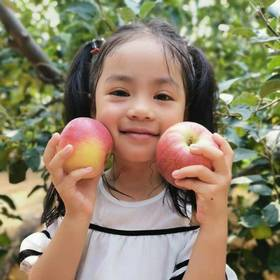 2019头茬新鲜苹果,拒绝冷库苹果,鲜红的颜色找回儿时苹果的味道5斤包邮