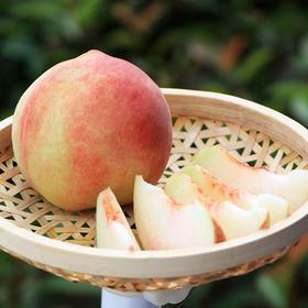 当季新品 | 博山蜜桃 新鲜采摘 甜蜜多汁 果肉清香 5斤装果园直发