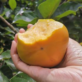 云南高山脆甜柿子  自然脱涩可直接食用  味甜爽口 净重5斤装