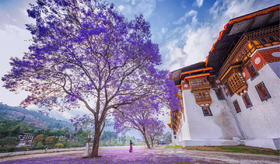 【不丹&尼泊尔】尼泊尔加德满都+博卡拉+不丹老皇宫+蓝花楹+虎穴寺+帕罗10日行摄(含尼泊尔往返不丹机票)