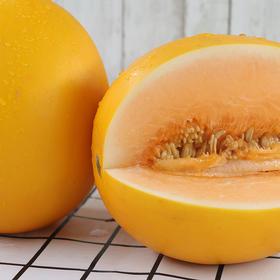 【民勤沙漠蜜瓜金红宝 7.8~8.2斤】| 香甜可口,水润多汁,源自沙漠的味道