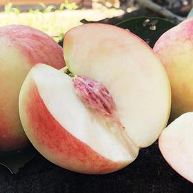 陕西秦王桃  多汁脆甜  个大饱满 新鲜采摘 桃子中的珍品 带箱约10斤