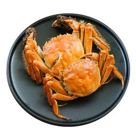【半岛商城】省内包邮 | 正宗盘锦河蟹 5对10只装 大闸蟹肉质鲜嫩蟹黄饱满 原产地顺丰直发