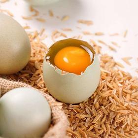 鄱阳县生态散养绿壳乌鸡蛋土鸡蛋30枚包邮