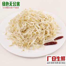 绿豆芽 1.6元/斤 生态种植 无公害 新鲜蔬菜-835162