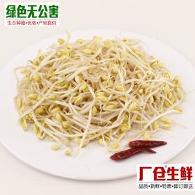 黄豆芽 1.6元/斤 生态种植 无公害 新鲜蔬菜-835161