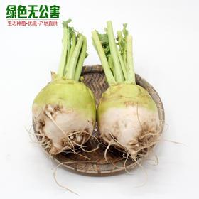 芥菜 3.1元/斤 精选3斤装 生态种植 无公害 新鲜蔬菜 玉根-835189