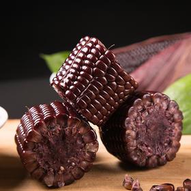 上新ㅣ忻州黑玉米 皮薄鲜嫩 颗粒饱满 清甜味美 老少皆宜 10根装