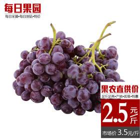 特级玫瑰香葡萄 精选2斤装 孕妇水果茶淀玫瑰香优品葡萄-864832