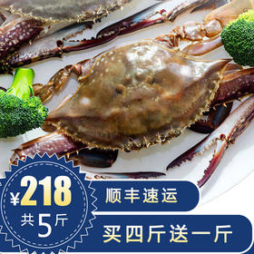 新鲜舟山梭子蟹买四斤送一斤,码头直发包鲜包肥!