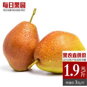 红香酥梨 精选3斤装 青皮脆梨酥脆多汁新鲜水果河北特产-864820