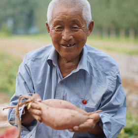 【助农扶贫】黄河滩红蜜薯  沙地种植  粉糯香甜