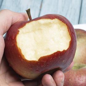 当季上新 | 盐源红将军苹果 清甜脆口 肉质紧致 7斤装果园现摘直达