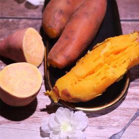 当季上新 | 黄河滩蜜薯 味香浓郁 入口绵柔 软糯香甜 5-8斤产地直达