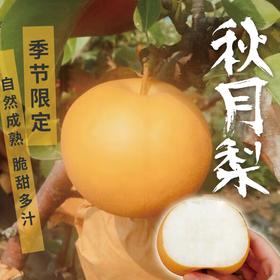 [秋月梨 下单后3-6天发货]自然成熟 脆甜多汁 顺丰包邮