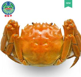 固城湖大闸蟹 母蟹单只价格 (单只2-2.5两)