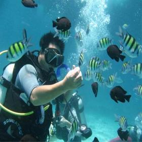 【潜水】自由行从广东出发,开始你的大鹏潜水蓝色之旅!(自由行,1人成行)