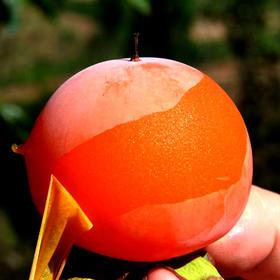 陕西火晶柿子 皮薄如纸 甜蜜多汁 每一口都是惊喜 4.8斤装包邮