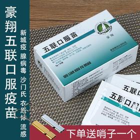 鸽子疫苗五联口服苗鸽药大全鸽用新城疫腺病毒预防药信鸽赛鸽三联