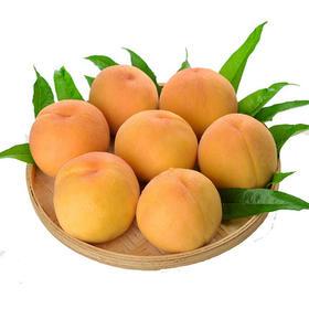 锦绣黄桃(6个装约3斤左右)