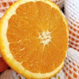 【半岛商城】进口澳洲丑橙 7斤装 约16个果左右 全国包邮
