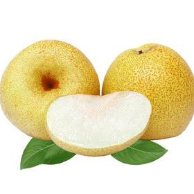 当季上新 | 砀山酥梨 圆润饱满 皮薄多汁 酥脆甘甜 净重9斤装