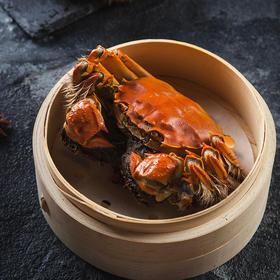 正宗阳澄湖大闸蟹 | 肉多膏肥,鲜甜紧实,错过要再等一年!